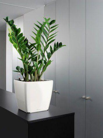 Indoor Plant Hire - Luwasa Indoor plant