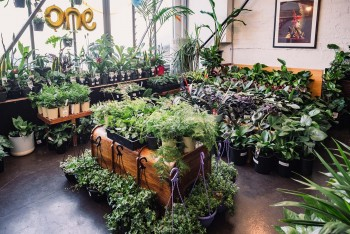 Melbourne - Huge Indoor Plant Warehouse