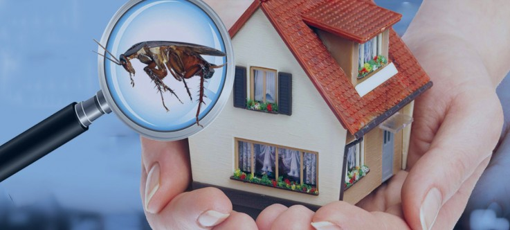 Commercial Pest Control Canberra