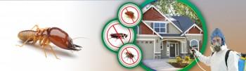 Restaurant Pest Control Canberra