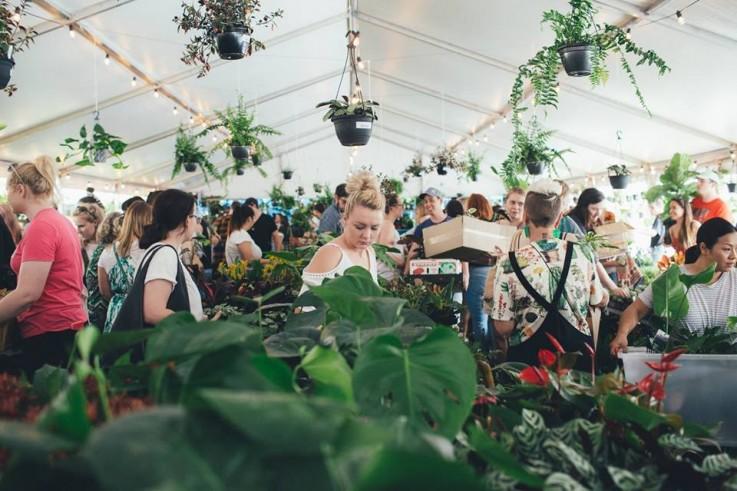 BRISBANE - Huge Indoor Plant Sale