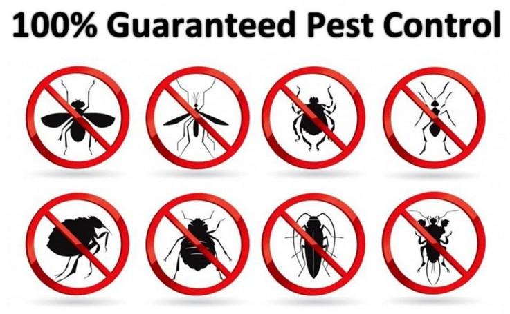 Residential Pest Control Brisbane