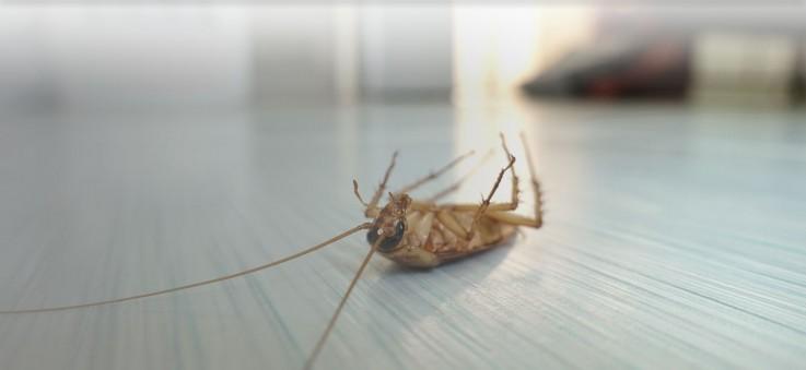 Trusted Pest Management Sydney