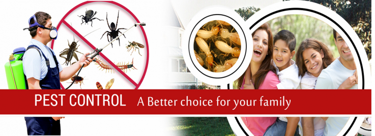 Wasp Pest Control Canberra