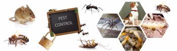 Commercial Pest Control Melbourne