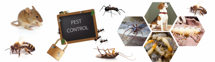 Commercial Pest  ...