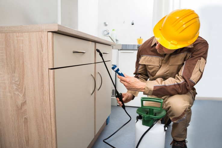 Residential Pest Control Adelaide