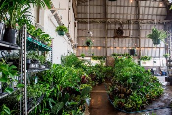 SYDNEY - Huge Indoor Plant Warehouse Sal