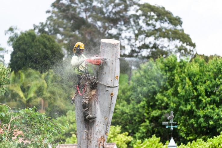Best Tree Stump Removal in Castlemaine