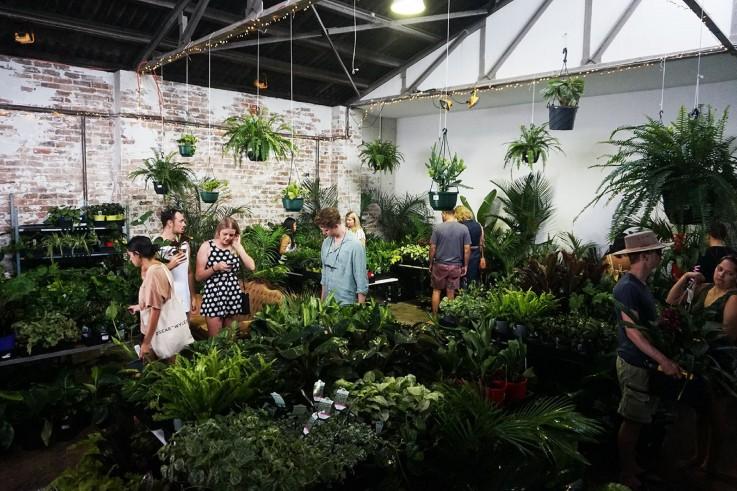 Sydney - Huge Indoor Plant Sale