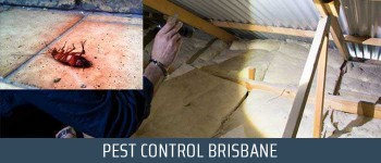 Back 2 New Pest Control Brisbane