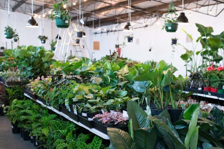 Melbourne - Huge Indoor Plant Sale - Spr