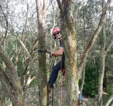 Reliable Stump Removal in Castlemaine