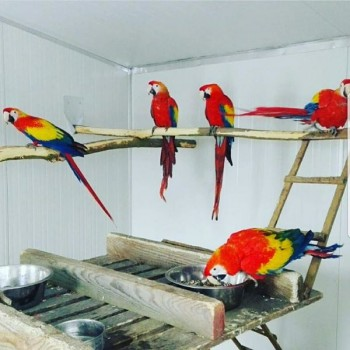 Parrots, cockatoos, Exotic birds and exo
