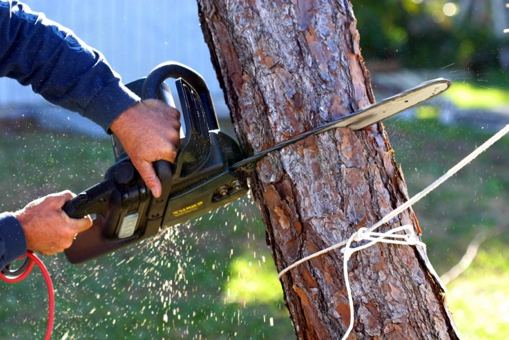 Tree Removal & Lopping Service Sunshine