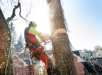 Tree Removal Specialist in Adelaide