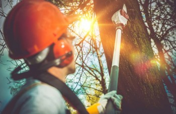 Qualified Team for Tree Removal Service Adelaide