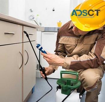 Professional Pest Control Experts in Melbourne & Launceston