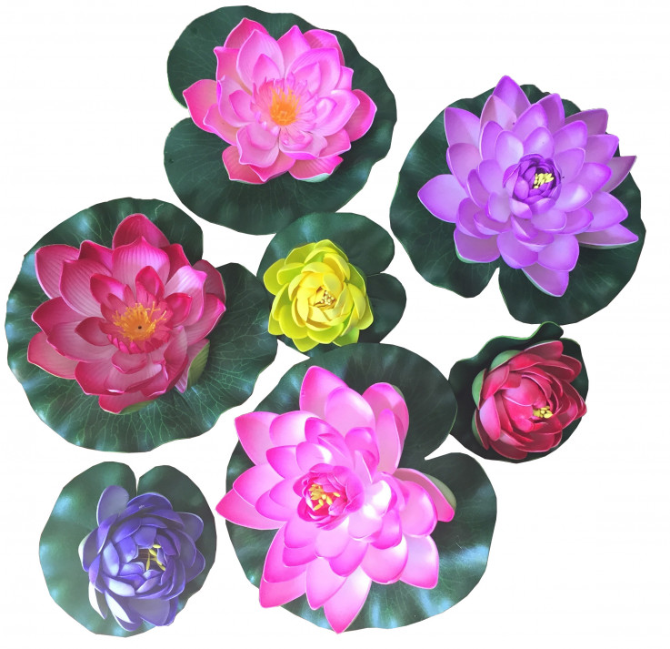 Floating Lotus Flowers